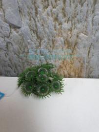 koraal groen middel