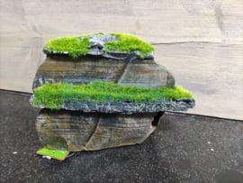 Decoratie rots/ steen met mos