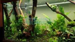 Kienhout in aquarium inrichten