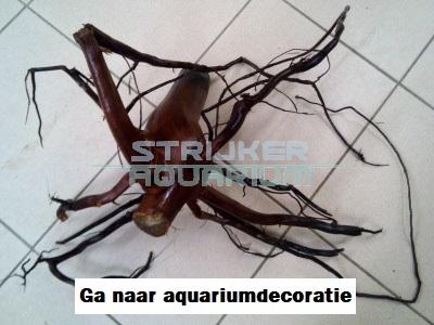 aquariumdecoratie online kopen