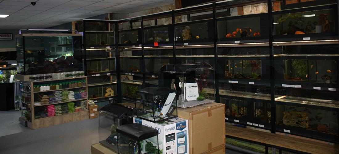 Aquariumvissen kopen
