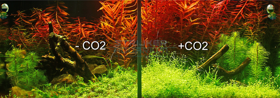 Verschillen co2 in aquarium
