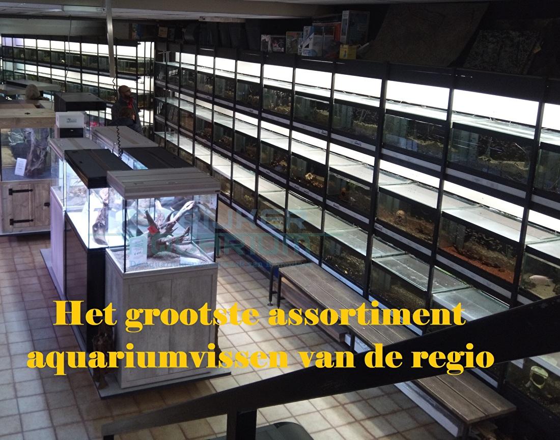 Groot assortiment aquariumvissen