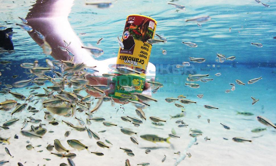 Online aquarium visvoer bestellen