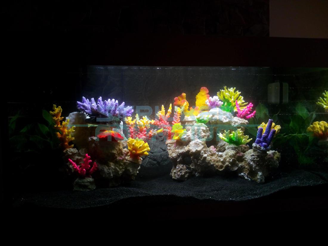 Kies uw aquarium decoratie voor goedkoop versieren.  Dé aquarium decoratie voor goedkoop en mooi