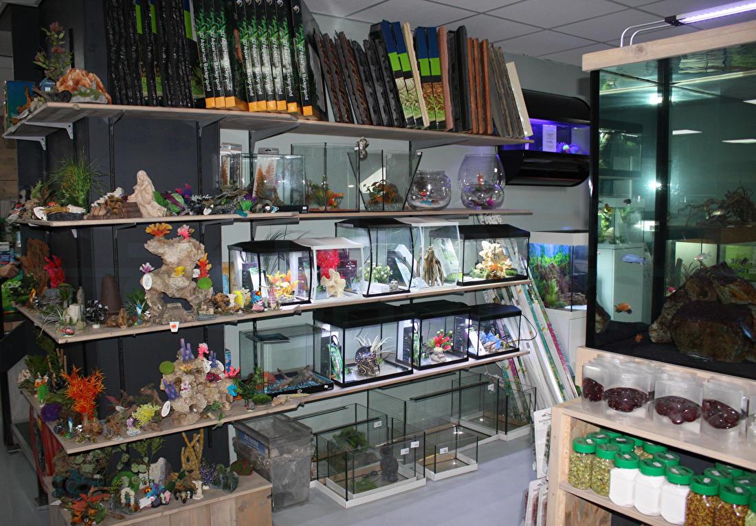 Klein aquarium kopen