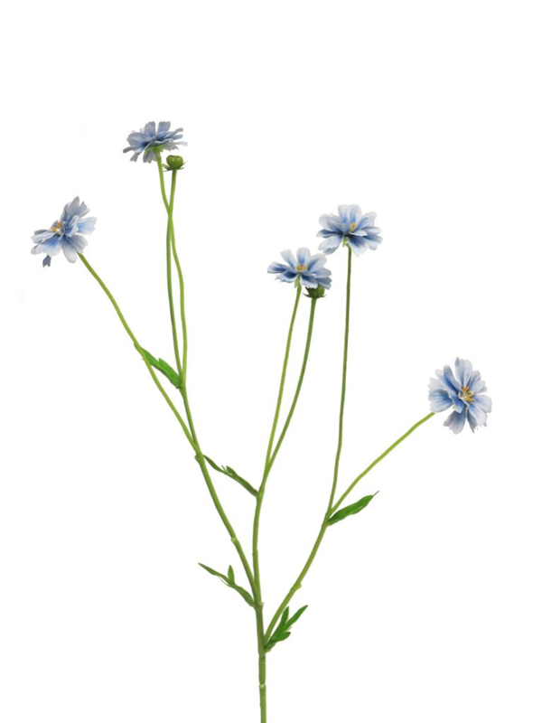 centaurea madelon blauw