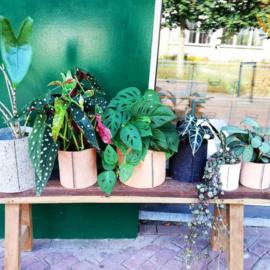 Nieuwe Winkel: Huisje Plantje Beestje