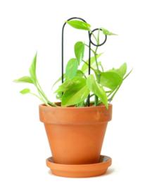 Botanopia Plantensteun Mini BUMP