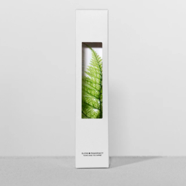 Slow Farmacy 'Plant in een fles' - Tabaria Fern
