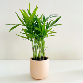 Planter - Terracotta