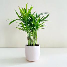 Planter - Pink