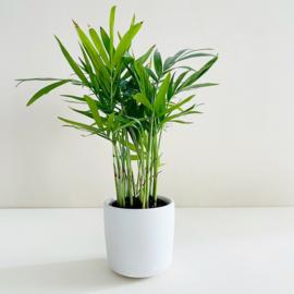 Planter - Wit