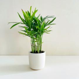 Planter - Oker
