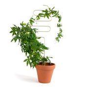 Botanopia Plantensteun Squiggle