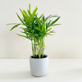 Planter - Grijs
