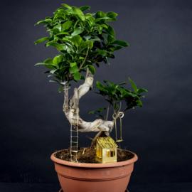 Botanopia Boomhut voor planten