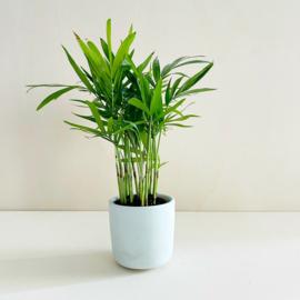 Planter - Mint