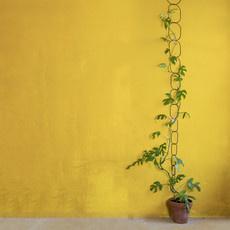 Botanopia Klimondersteuning voor planten Zwart