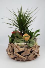 Plantenbakje hout Draceana rood