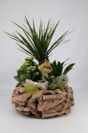 Plantenbakjes met houten bakje