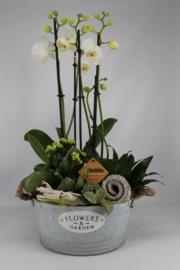 Plantenbakjes met Orchidee