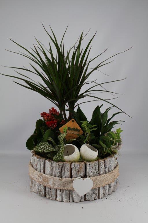 Plantenbakje rond schors rood