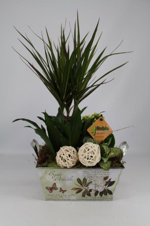 Plantenbakje zink ovaal Draceana (groen)