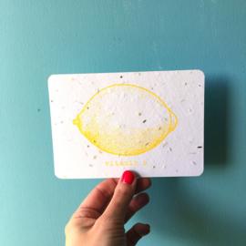 Vitamin C Postcard - set van 4 kaarten met enveloppen