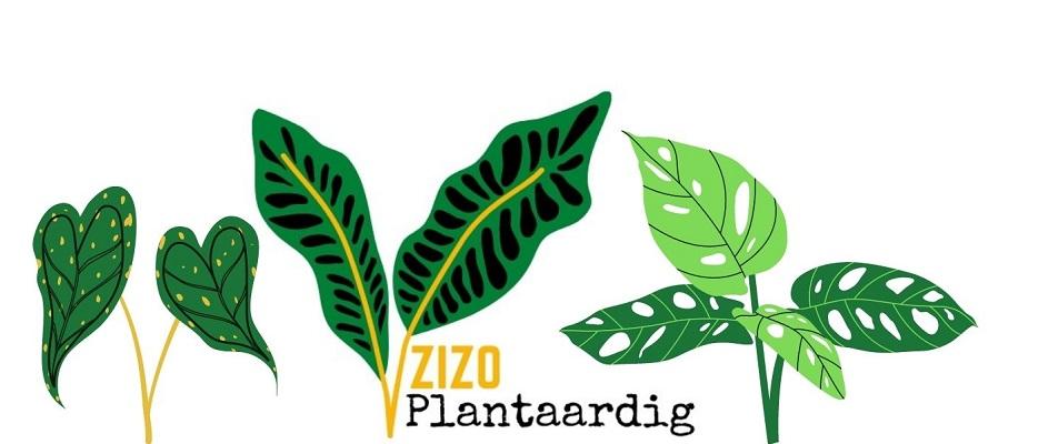 Zizo Plantaardig