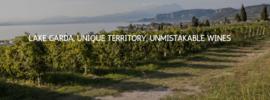 Cantina Castelnuovo del garda Pinot grigio 2020