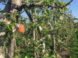 Fruitteler en bijenkasten