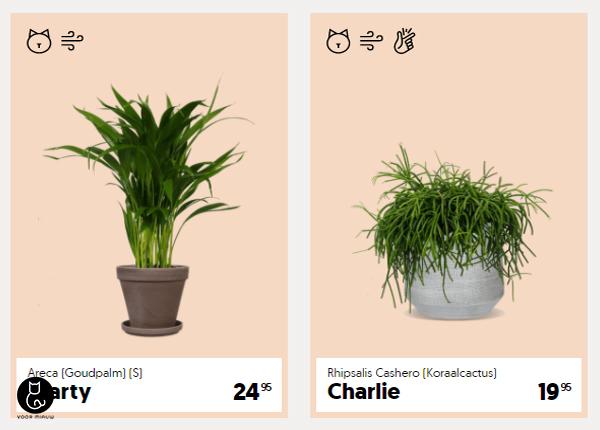 blog-over-katvriendelijke-planten