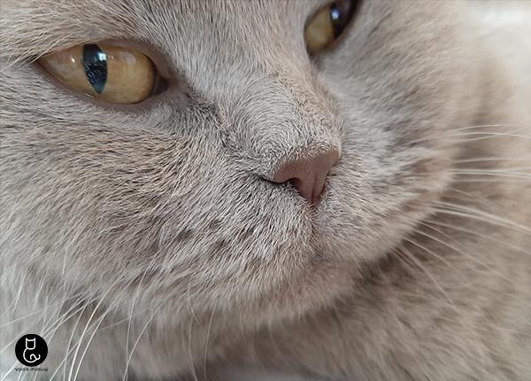 blog-voormiauw-reukvermogen-kat