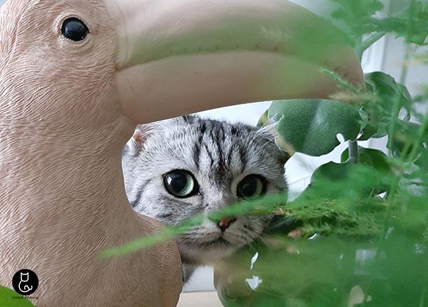 katvriendelijke-planten-blog