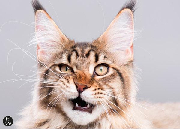 katten-en hun-reukvermogen-blog