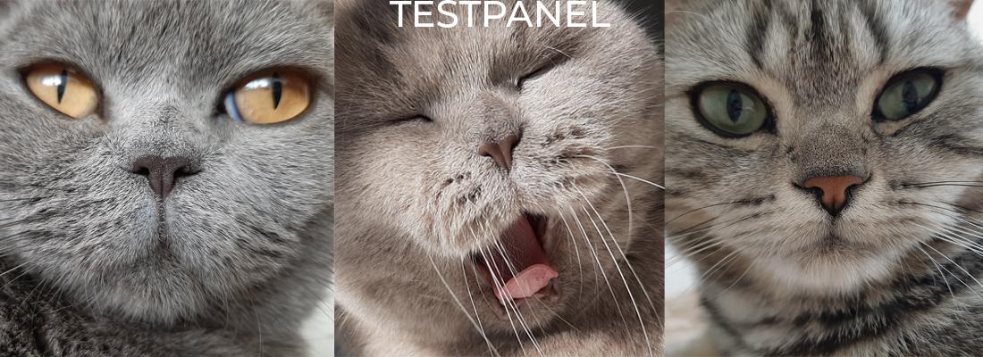 3 katten testpanel voor webshop voormiauw