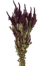 Kattenstaart (Amaranthus)