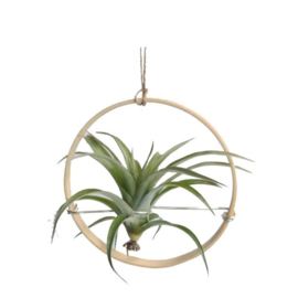 DÏST Ring Off  Airplants Small