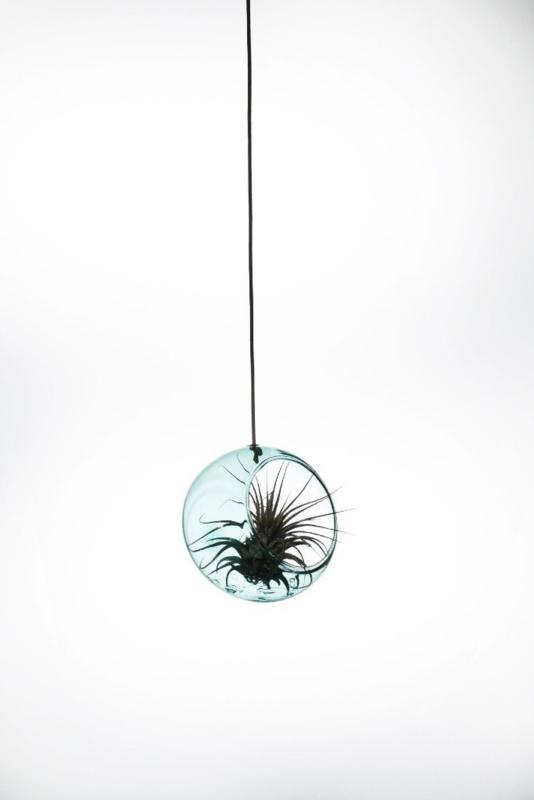 Plant bubble Cyan