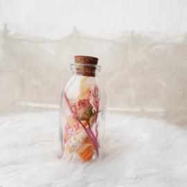 Mini flesje Strelizia