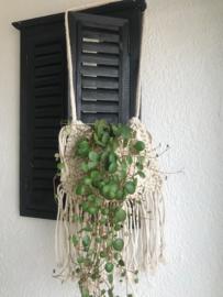 Macramé plantenhanger
