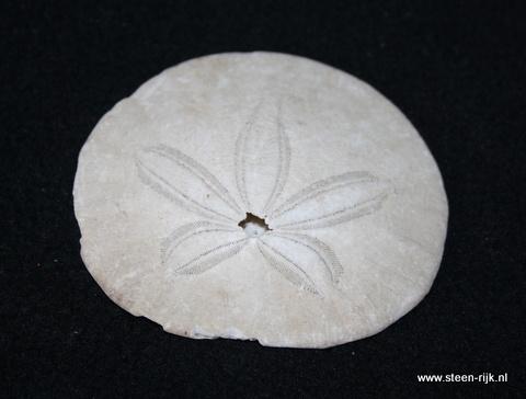 zeeegel fossiel