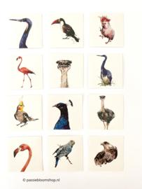 Stickers vierkant tropische vogels ( 12 stuks)