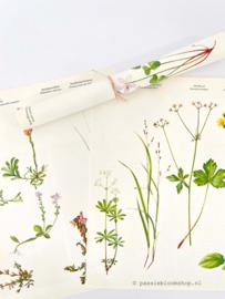 Vintage papier bloemen en planten