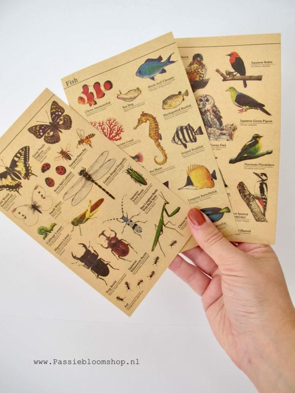 Stickers kraft vogels