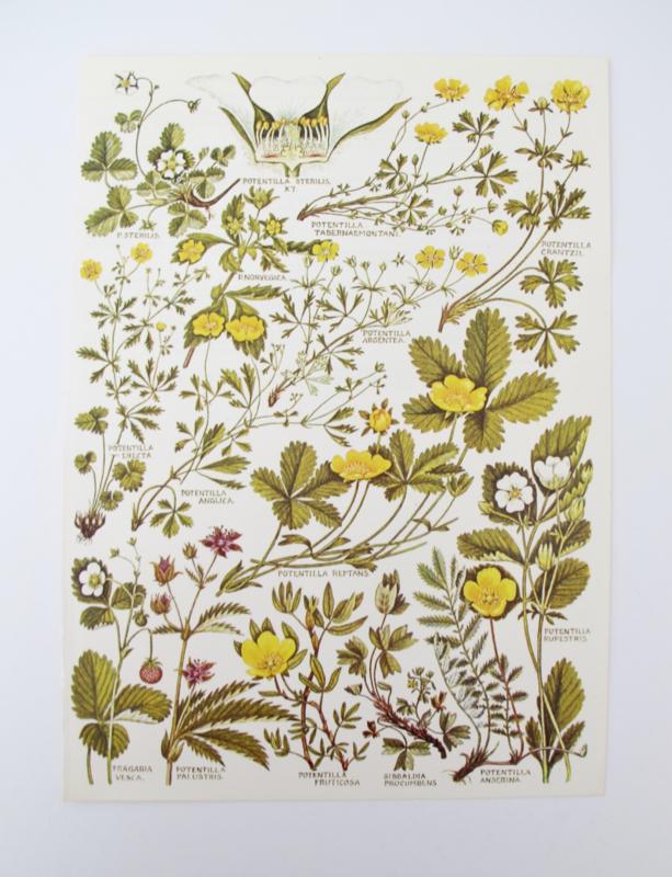 Vintage papier botanisch planten en bloemen