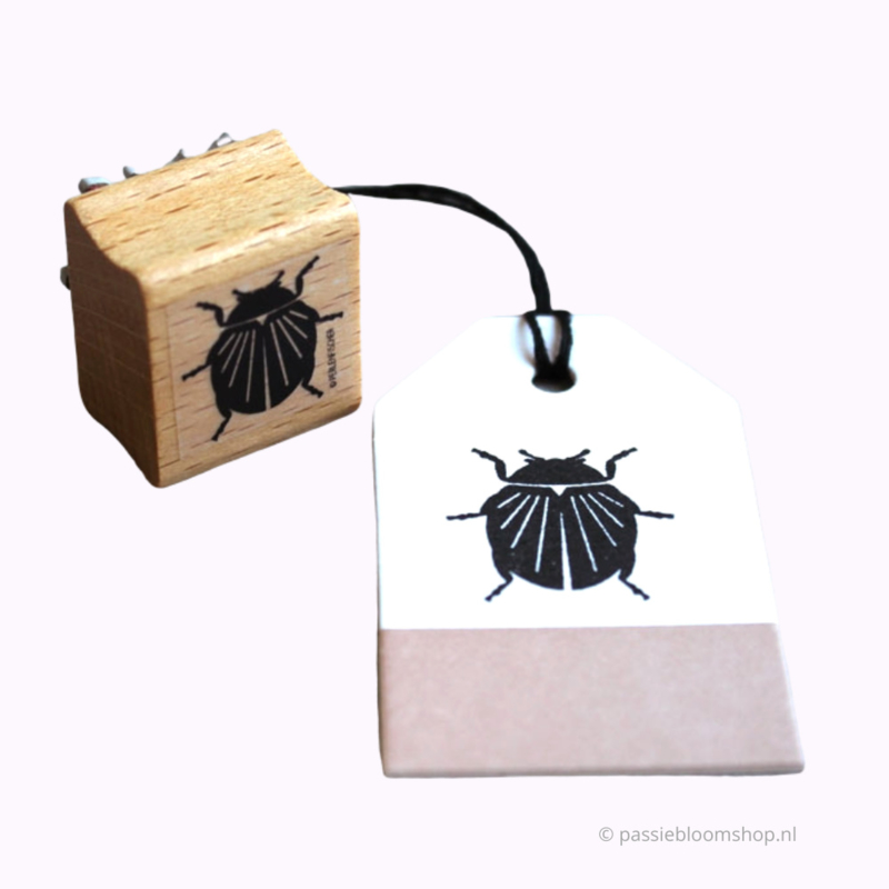 Stempel hout insect, kevertje