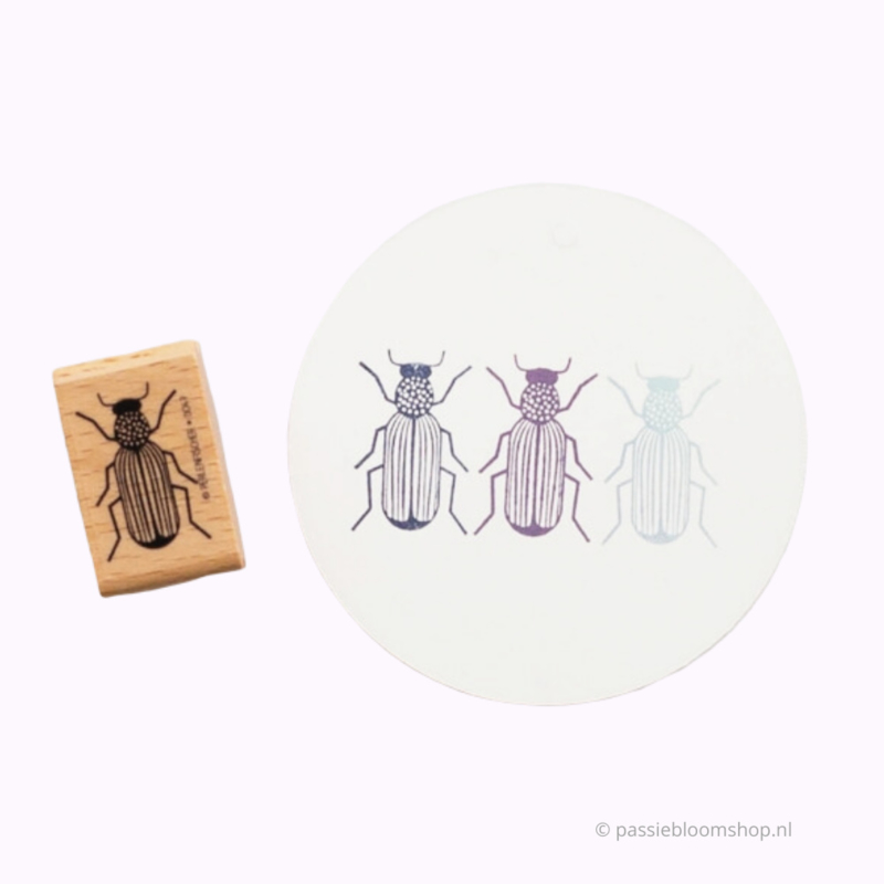 Stempel hout insect kever