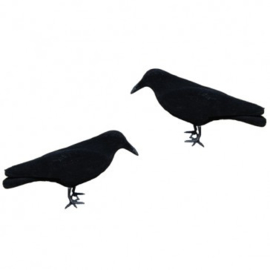 Lokvogel Kraai Geflockt 10stuks